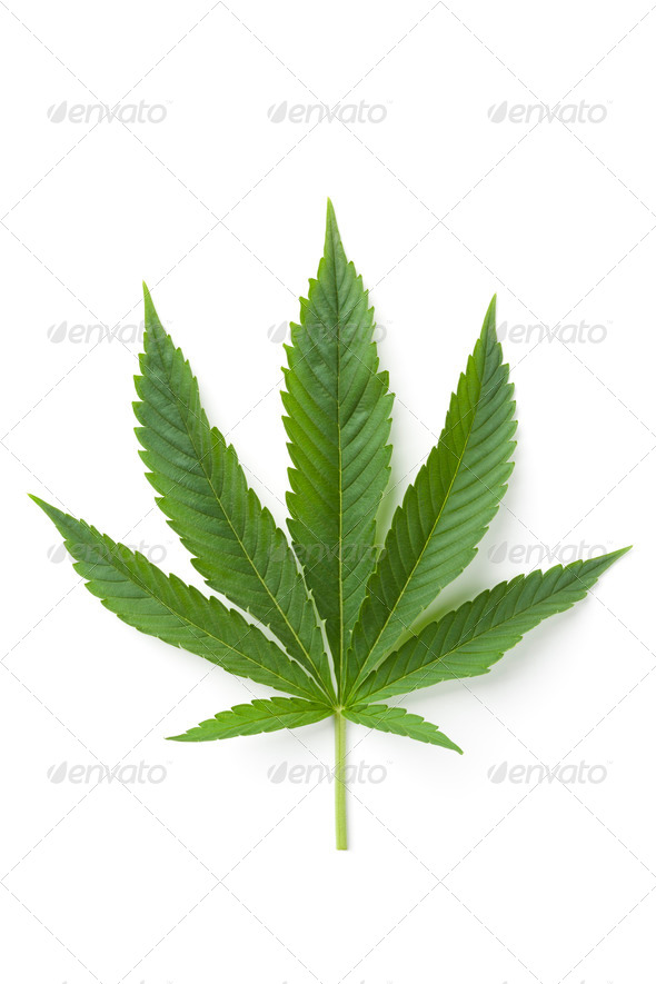 Single Marijuana leaf - Stock Photo - Images