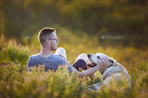 Man with dog lying on meadow at sunset - Stock Photo - Images