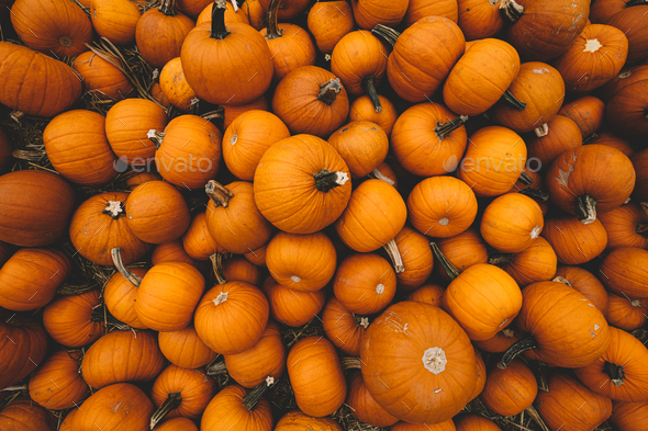 Fresh pumpkins background. Halloween and Thanksgiving - Stock Photo - Images