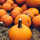 Fresh pumpkins on hay. Halloween and Thanksgiving - PhotoDune Item for Sale