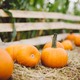Pumpkins lying on hay on the farm. Halloween and Thanksgiving - PhotoDune Item for Sale