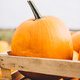 Harvested pumpkins in wooden crate on farm market. - PhotoDune Item for Sale