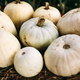 White pumpkins lying on hay. Halloween and Thanksgiving - PhotoDune Item for Sale