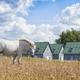 beautiful horse - PhotoDune Item for Sale