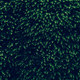 Dark Green wall made from natural trees - PhotoDune Item for Sale