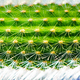 Close-up of a prickly green cactus texture - PhotoDune Item for Sale