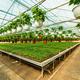 Poinsettia pulcherrima plants - PhotoDune Item for Sale