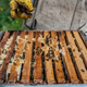 Close up view of the opened hive showing frames populated by honey bees. Honey bees crawl in an open - PhotoDune Item for Sale