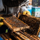 The beekeeper looks after bees, honeycombs full of honey, in a protective beekeeper's suit at - PhotoDune Item for Sale