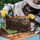 Beekeeper is working with bees and beehives on the apiary - PhotoDune Item for Sale