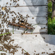 Bee close up. Bees at the bee hive. Swarm of bees - PhotoDune Item for Sale