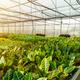 Modern large greenhouse - PhotoDune Item for Sale