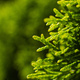 A large green bush grows near the trees, picture with a focus on a small twig - PhotoDune Item for Sale