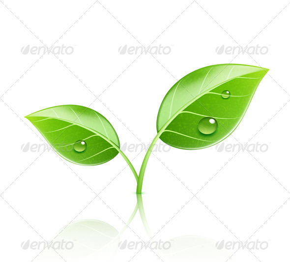 Green leaves - Nature Conceptual
