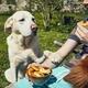 Dog begging at eat - PhotoDune Item for Sale