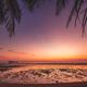 Beautiful sunset Silhouette coconut palm tree - PhotoDune Item for Sale