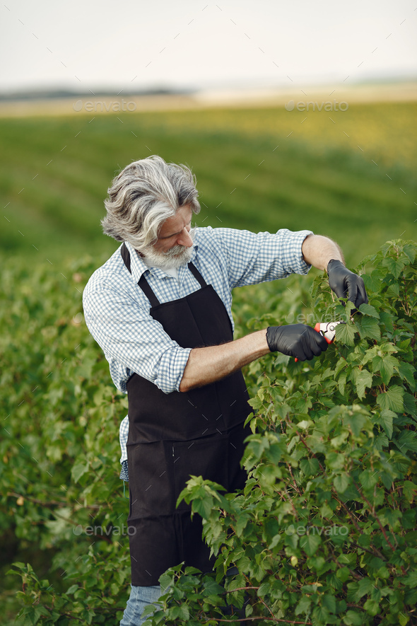 Senior in a black apron use a averruncator - Stock Photo - Images