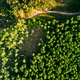 Aerial View Green Forest Deforestation Area Landscape. Top View Of Fallen Woods Trunks And Growing - PhotoDune Item for Sale