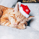 Cute ginger cat in xmas hat - PhotoDune Item for Sale