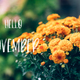Hello November text and chrysanthemum - PhotoDune Item for Sale
