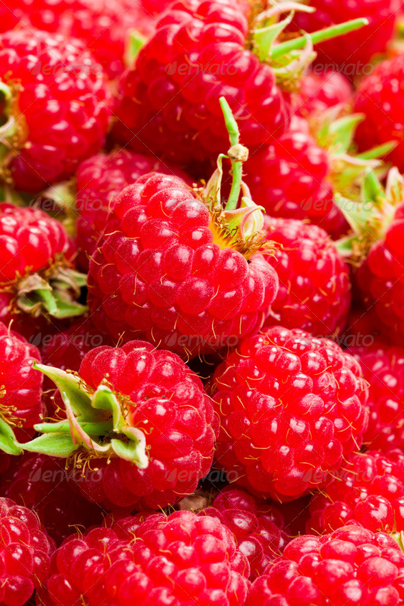 a lot of raspberries - Stock Photo - Images