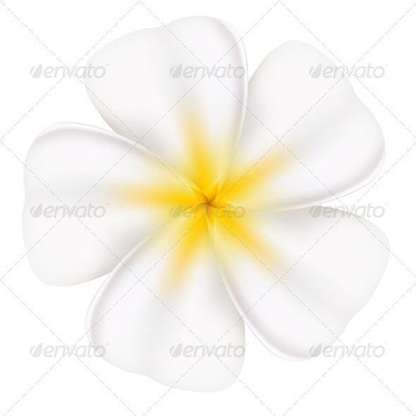 Beautiful frangipani - Organic Objects Objects