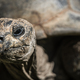 Closeup of the head of a tortoise under the sunlight with a blurry background - PhotoDune Item for Sale