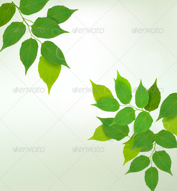 Nature background with fresh green leaves   - Flowers & Plants Nature
