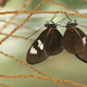 Colorful Tropical butterflies perched on twigs and leaves - PhotoDune Item for Sale