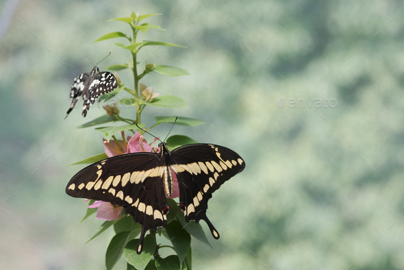 Colorful Tropical butterflies perched on twigs and leaves - Stock Photo - Images