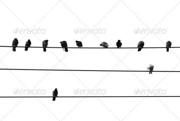 Birds On Wire - Stock Photo - Images