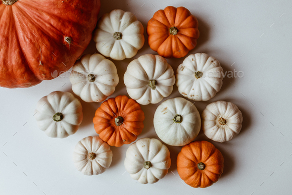 Many orange and white pumpkins on white background. Halloween concept.