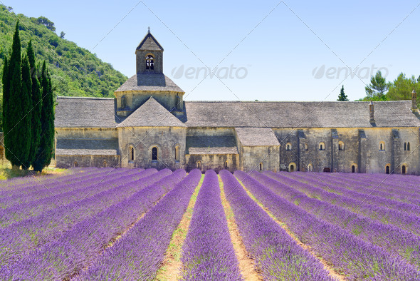 Abbey of Senanque blooming lavender flowers. Gordes, Luberon, Provence, France. - Stock Photo - Images