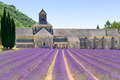 Abbey of Senanque blooming lavender flowers. Gordes, Luberon, Provence, France. - PhotoDune Item for Sale