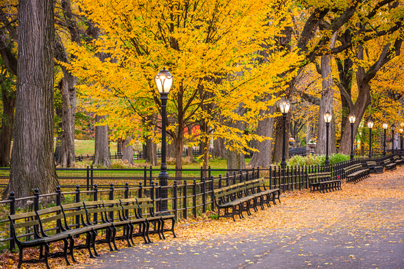Central Park at The Mall in New York City - Stock Photo - Images