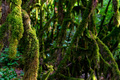Close up of moss growing on tree branches - PhotoDune Item for Sale