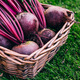Fresh beet, beetroot harvest in wooden basket on green grass garden background - PhotoDune Item for Sale