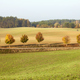 Autumnal landscape with row of trees by a road. - PhotoDune Item for Sale