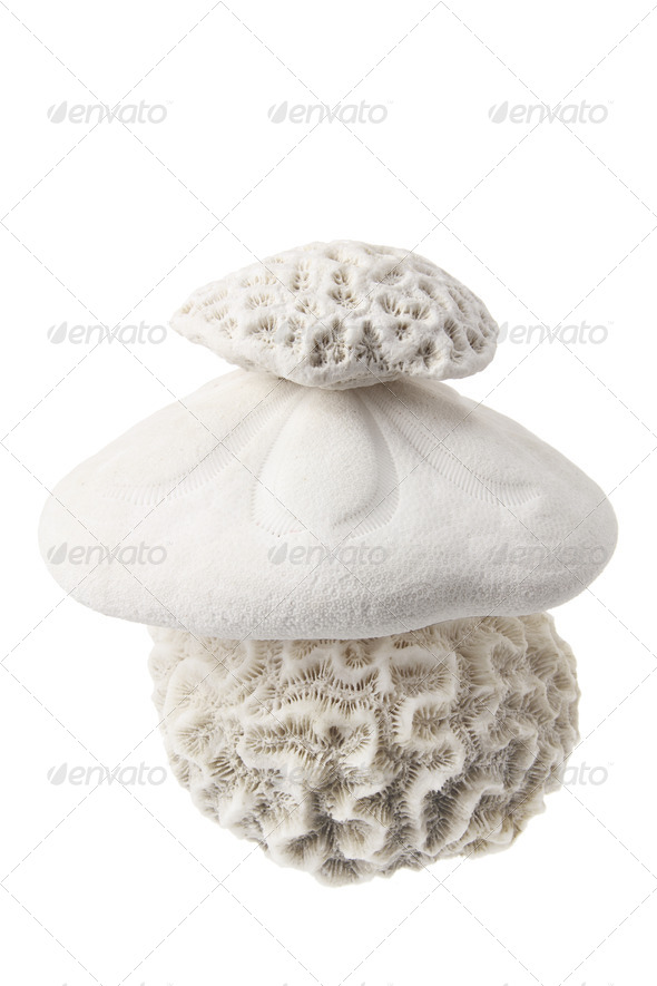 Corals - Stock Photo - Images