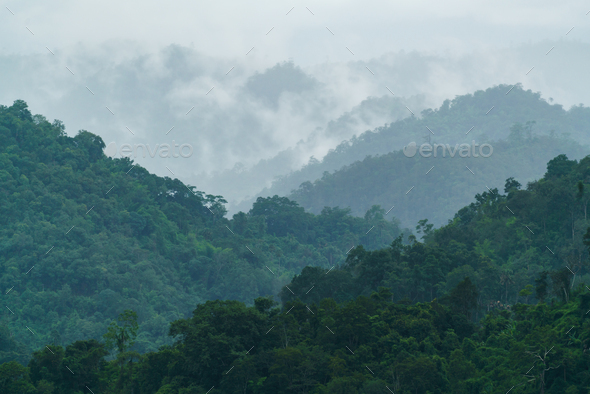 tropical forest with fog and mist - Stock Photo - Images
