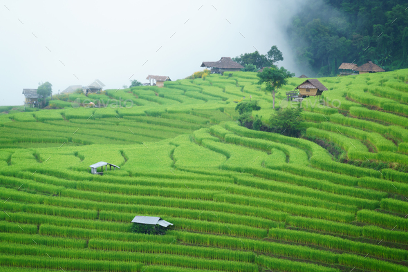 The terraced rice paddy in Bong Piang village Chiang mai Thailand - Stock Photo - Images