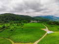 Top view of green tea plantation taken by drone camera - PhotoDune Item for Sale