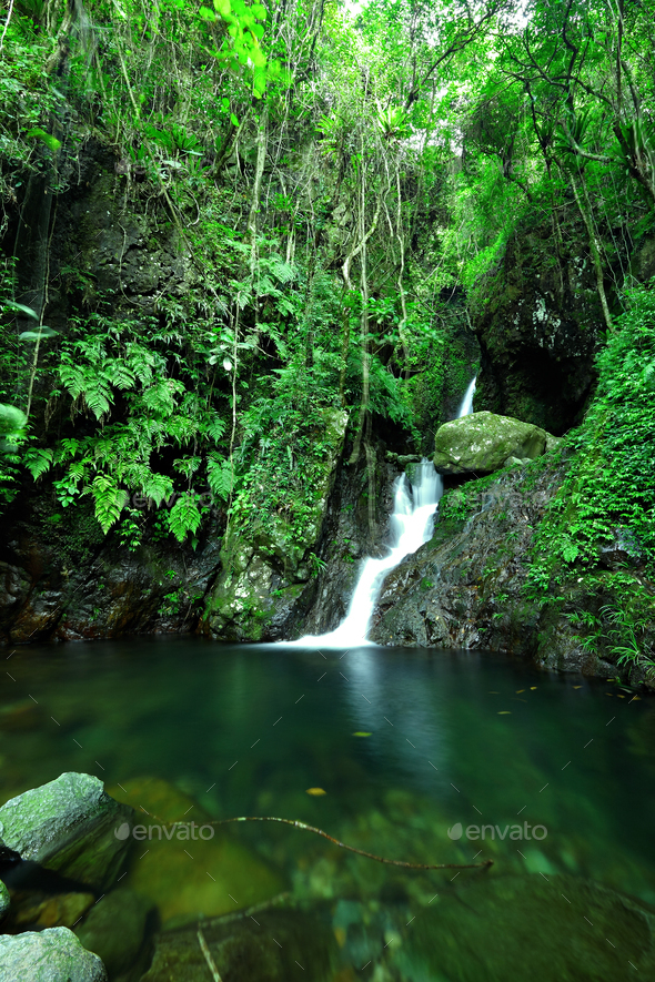 cascade in forest - Stock Photo - Images