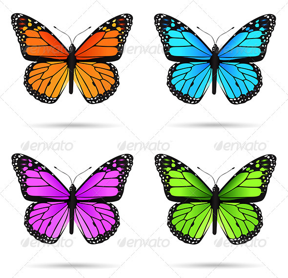 Multicolored butteflies  - Miscellaneous Characters