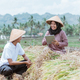 modern farmers using tablets to market the rice harvested - PhotoDune Item for Sale
