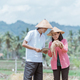 two farmers wearing hats holding rice plants and observing the yield while standing using tablets - PhotoDune Item for Sale