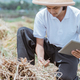 close up of farmers observing rice crop yields when using a tablet pc - PhotoDune Item for Sale