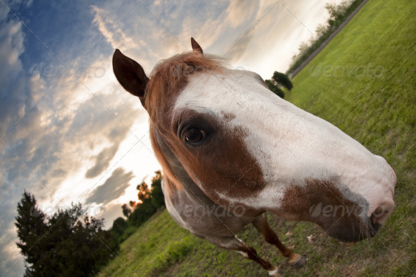 Sunset Horse - Stock Photo - Images