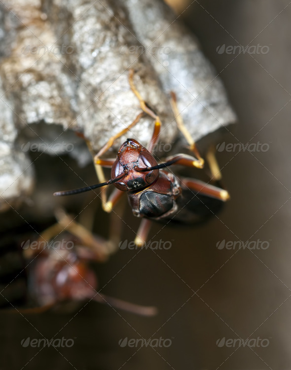 Wasp on Nest - Stock Photo - Images
