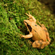 Agile frog - PhotoDune Item for Sale